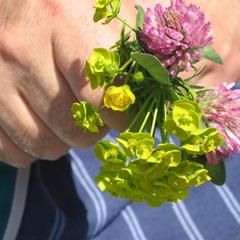 Liste over monocot & dicot Blomster