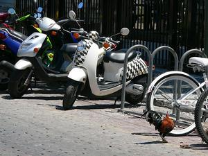 Moped Vs.  Scooter